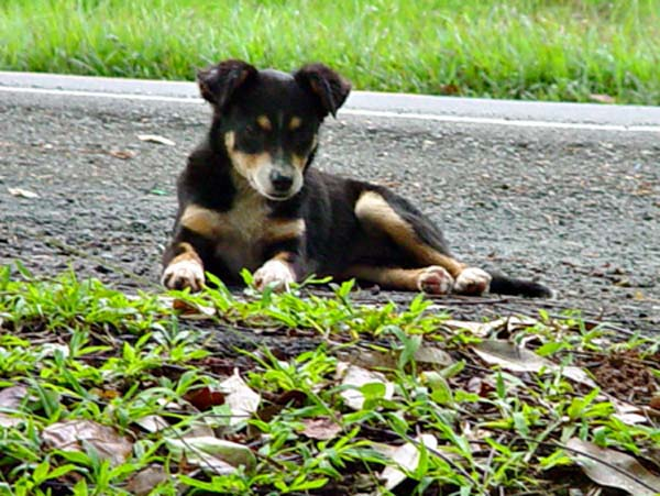 a stray dog in San Juan, photographed by Janet Kuypers