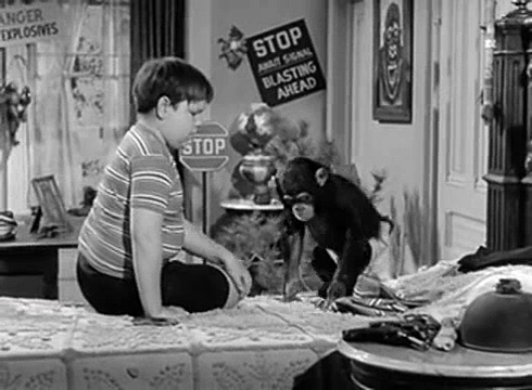 The Addams Family S01e28 My Son, the Chimp