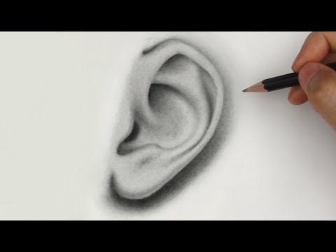 How to Draw Ears | Side View