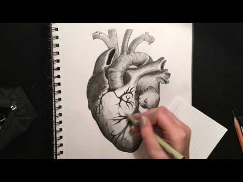 How to Use Charcoal and Ink Together: Human Heart Drawing
