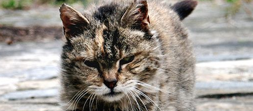 The History Of One Tough Motherfucker Stray Cat Poem by Charles Bukowski
