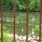 landscape through fence