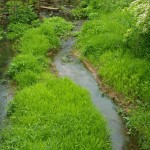 awesome greenness beside stream