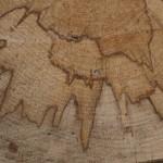 patterns in tree trunk