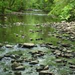 pretty pebbles in stream