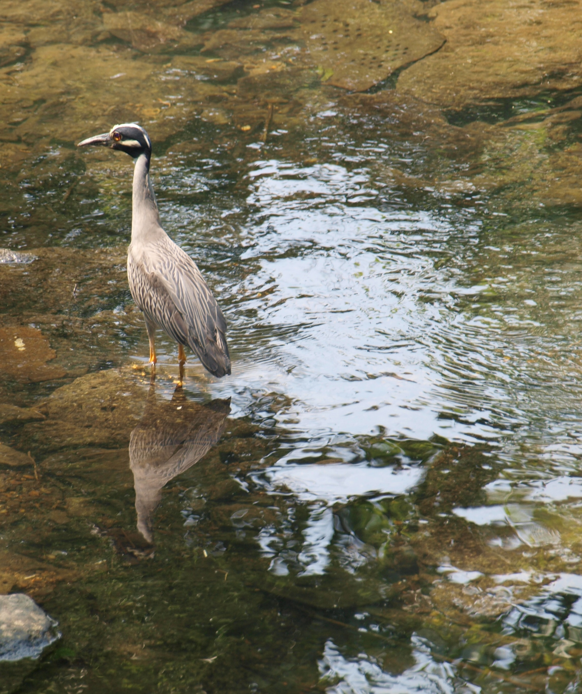 crane on creek