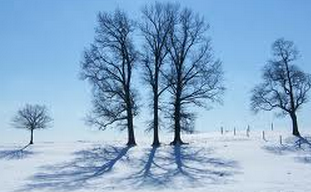 Winter Trees Poem by Sylvia Plath